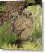 Great Horned Owlets Metal Print