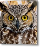 Great Horned Stare Metal Print