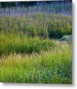 Great Marsh Grass Metal Print