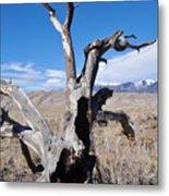 Great Sand Dunes National Park Fallen Tree Portrait Metal Print