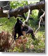 Great Smoky Mountain Bear Metal Print