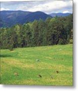 Great Smoky Mountains Deer Grazing In Field Metal Print