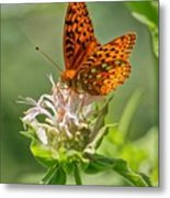 Great Spangled Fritillary On Bee Balm Metal Print