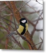 Great Tit Male Metal Print