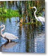 Great White And Great Blue Metal Print