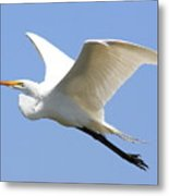 Great White Egret In Flight . 40d6845 Metal Print