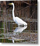Great White Egret Metal Print by James Marvin Phelps