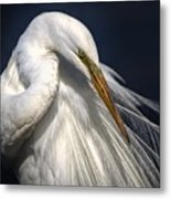 Great White Egret Print One Metal Print