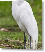 Great White Egret Vertical Metal Print