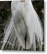 Great White Egret Windblown Metal Print
