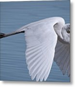Great White Flight Metal Print