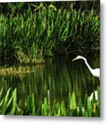 Great White Heron Green Cay Wetlands Metal Print