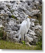 Great White Heron Race Metal Print