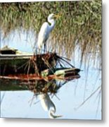 Great White On Row Boat Metal Print