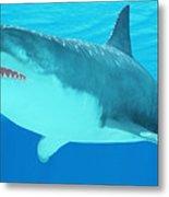 Great White Shark Close-up Metal Print