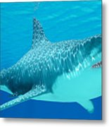 Great White Shark Undersea Metal Print