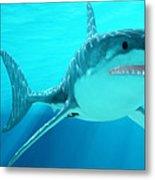 Great White Shark With Sunrays Metal Print
