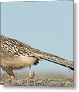 Greater Roadrunner On The Hunt Metal Print