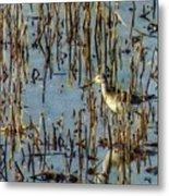 Greater Yellowleg In Reeds Metal Print