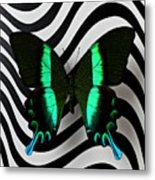 Green And Black Butterfly On Wavey Lines Metal Print
