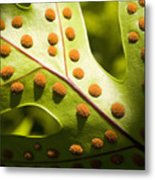Green And Orange Leaf Metal Print