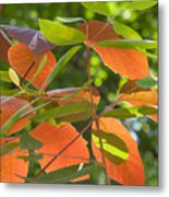 Green And Orange Leaves Metal Print