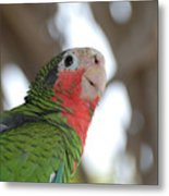Green And Red Conure With Ruffled Feathers Metal Print