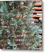 Green And Red - Cypress Branches Over Antique Roman Brick Wall Metal Print