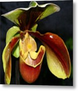 Green And Red Orchid Metal Print