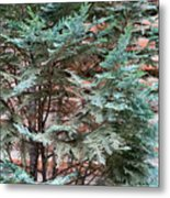 Green And Red - Slender Cypress Branches Over Rough Roman Brick Wall Metal Print