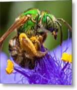 Green Bee Macro Metal Print