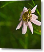 Green Bee Searches For Pollen Metal Print