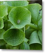 Green Bells Metal Print