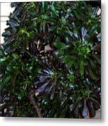 Green-black Cucculent Plant. Big Bush Metal Print