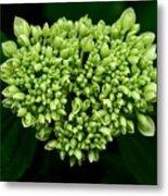 Green Bloom Metal Print