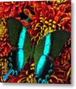 Green Blue Butterfly Metal Print by Garry Gay