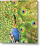 Green Blue Peacock Showing Off His Feathered Tail No2 Metal Print