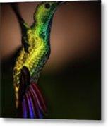 Green Breasted Mango Hummingbird Metal Print
