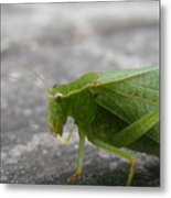 Green Bug Metal Print