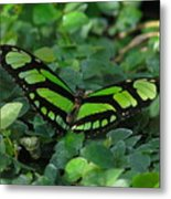 Green Butterfly Metal Print