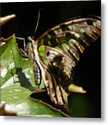 Green Checkered Skipper Metal Print