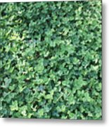 Green Clovers Metal Print