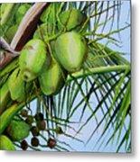 Green Coconuts-02 Metal Print