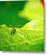 Green Creature On A Broad Leaf. Metal Print