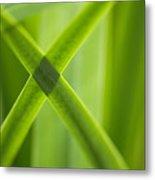 Green Crossing Metal Print by Silke Magino
