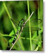 Green Dragonfly Metal Print