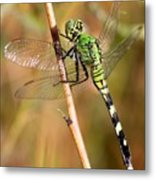Green Dragonfly Closeup Metal Print