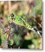 Green Dragonfly Macro Metal Print