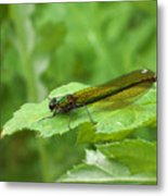 Green Dragonfly On Leaf Metal Print