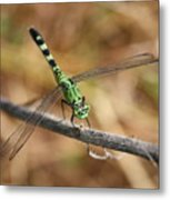Green Dragonfly On Twig Metal Print
